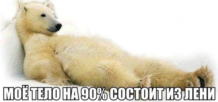 Подборка прикольных фото 02.02.2015 (99 фото)