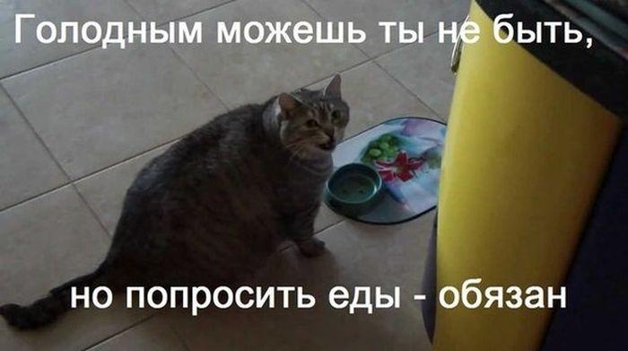 Подборка прикольных картинок 06.02.2015 (96 фото)