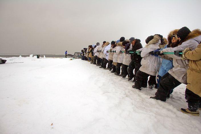 Эскимосы впоймали кита (12 фото)
