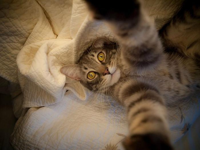Классные гифки с котами (6 гифок и одно фото)