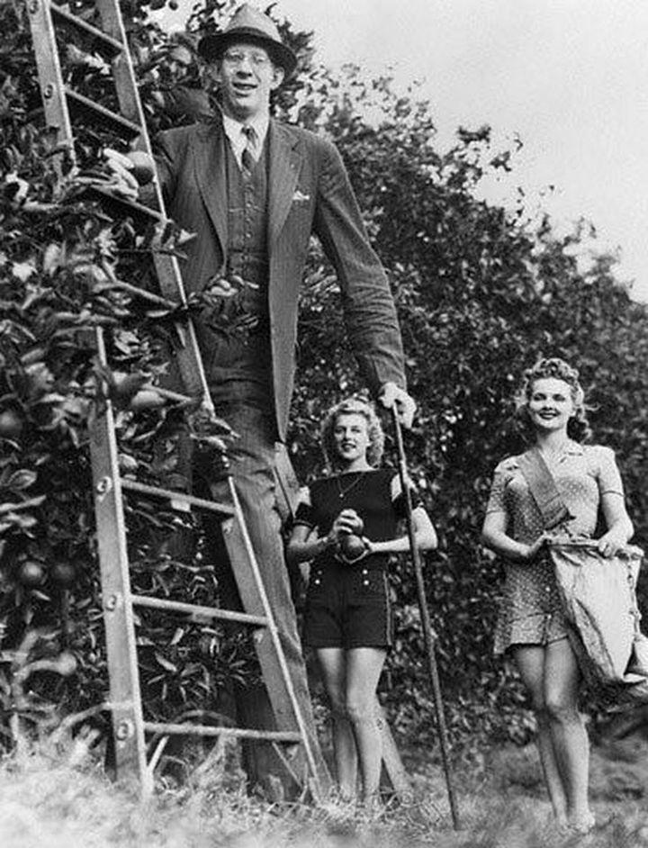 Фотографии и видео самого высокого человека в мире
