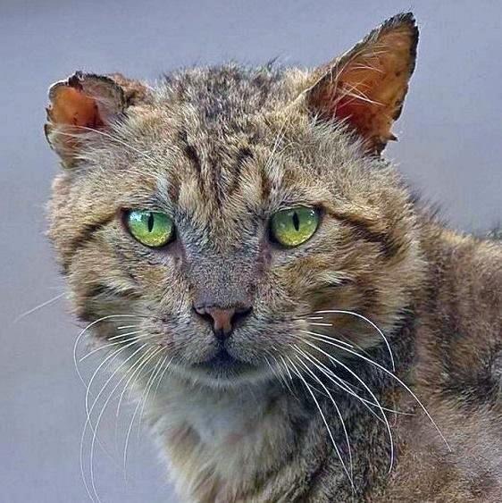 Подборка гифок с бесстрашными котами (14 гифок)