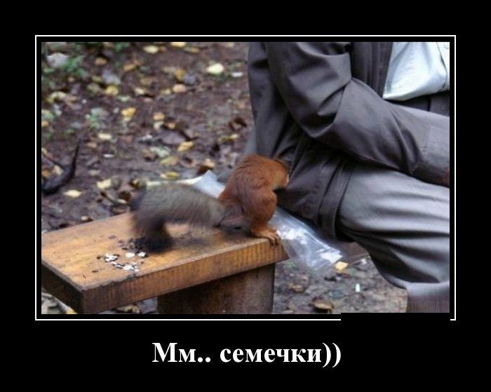Подборка демотиваторов 16.02.2015 (29 картинок)