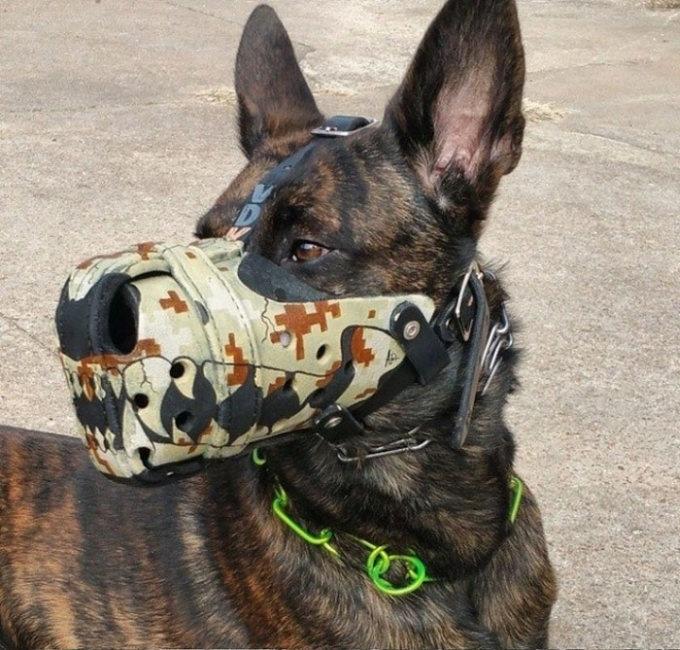 Необычные намордники для собак (18 фото)