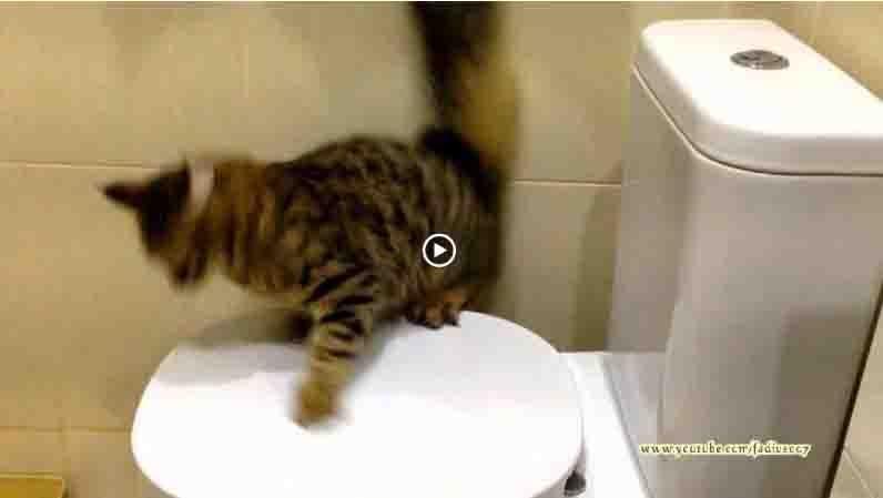 Подборка смешного видео с котами (11 видео)