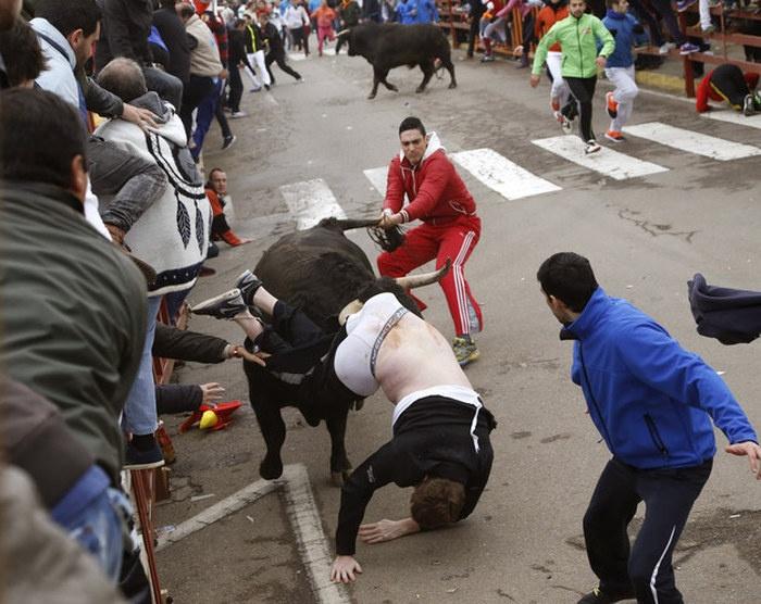 Последствия неудачного забега с быками (5 фото)