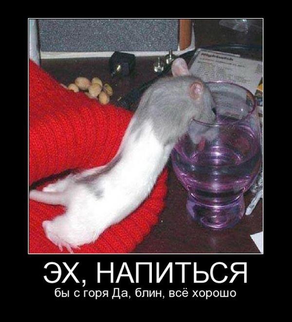 Подборка демотиваторов 17.02.2015 (30 картинок)
