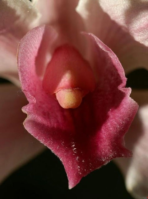Чувственные фото цветов (9 фото)