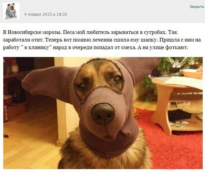 Прикольные истории ветеринаров (26 скринов)