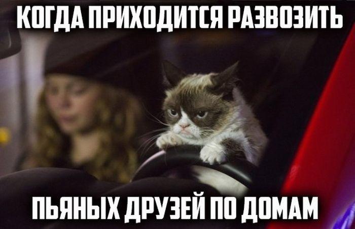 Подбоорка прикольных картинок 23.02.2015 (102 картинки)