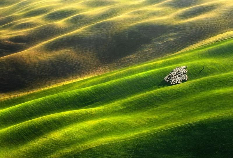Классные фото символа этого года - овцы