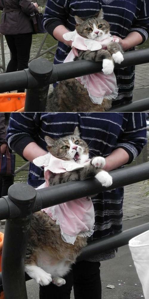 Фотографии котов (100 фото)