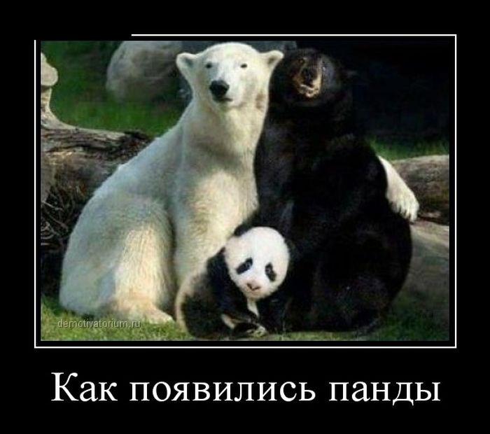 Подборка демотиваторов 25.02.2015 (30 картинок)