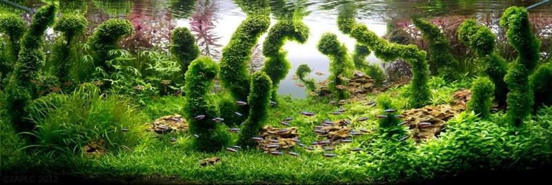 Мастерство аквариумных пейзажей (10 фото)