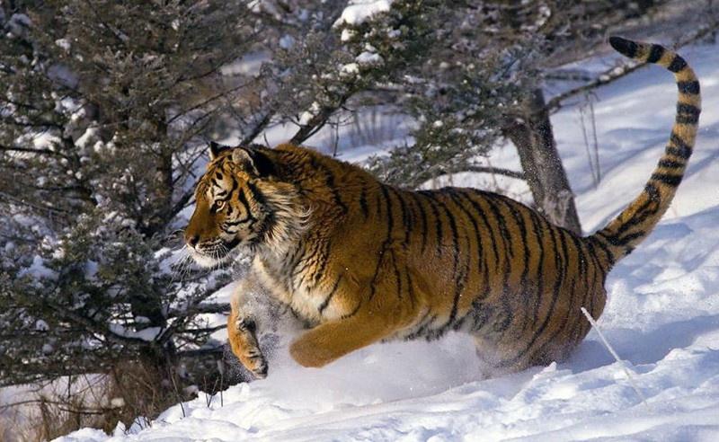 Отличные фото хищников (38 фото)