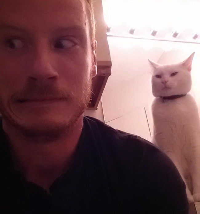 27 фото котов, задумавших что-то плохое