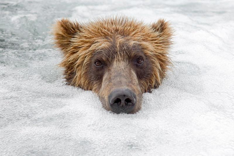 """Фотографии """"медвежьего фотографа"""""""