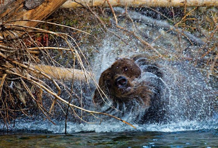 Подборка классных фото диких животных (33 фото)