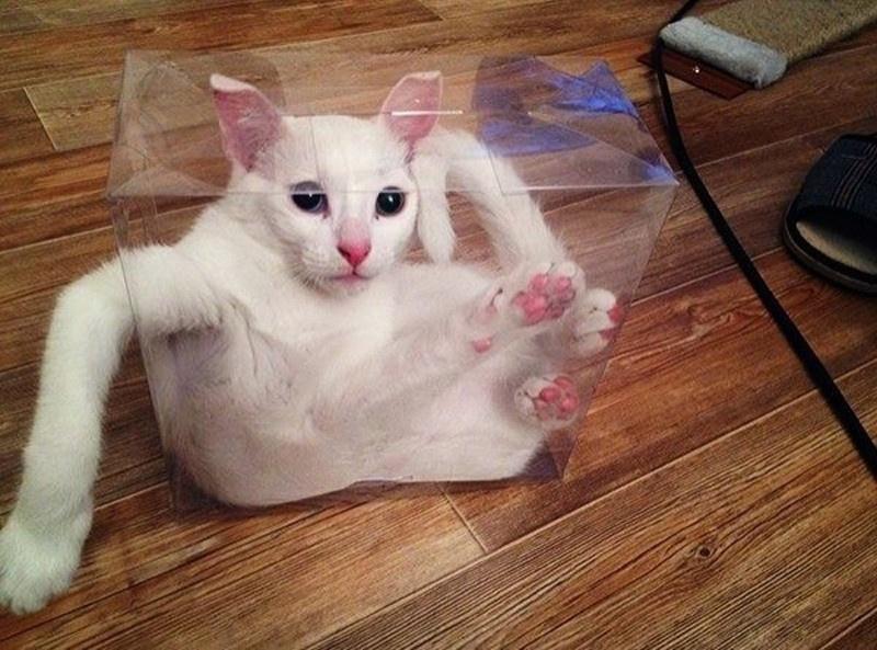 Подборка фото котов, попавших в затруднительное положение (20 фото)