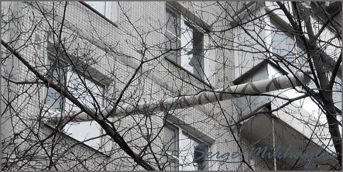 Специальное приспособление для путешествия кота на улицу (3 фото)