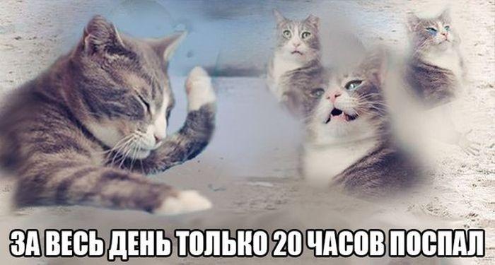 Подборка прикольных картинок 12.03.2015 (105 фото)