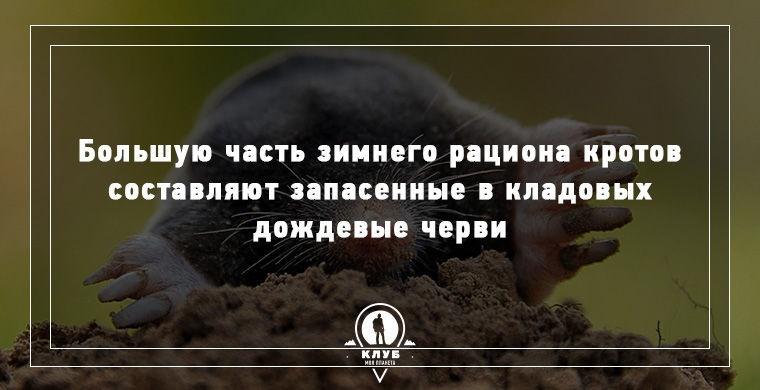 Прикольные факты из жизни животных (15 картинок)