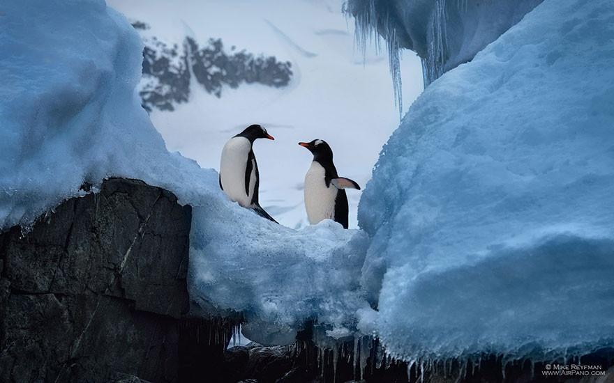 14 классных фото Антарктиды