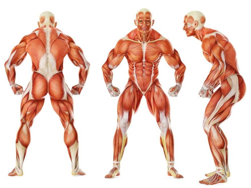 Защитные реакции нашего тела (11 фото)