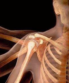 Впечатляющие анатомические фотографии (13 фото)