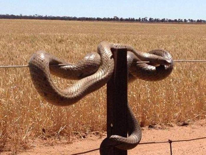 Фотографии представителей дикой природы Австралии (20 фото)