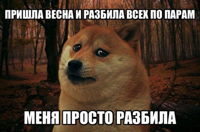 Подборка прикольных картинок 19.03.2015 (104 фото)