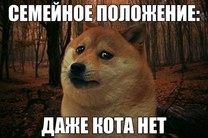 Подборка прикольных картинок 23.03.2015 (92 картинки)