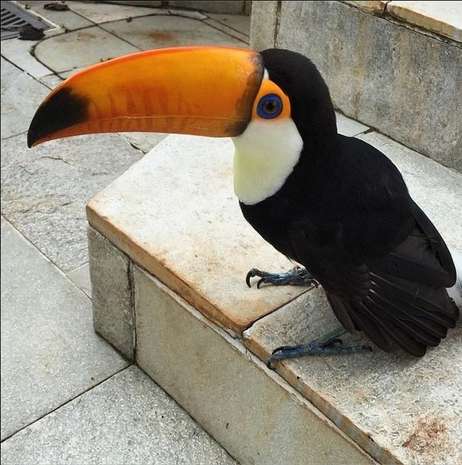 Неплохая альтернатива домашнему попугаю (7 фото)