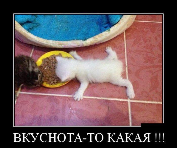Подборка демотиваторов 26.03.2015 (28 картинок)