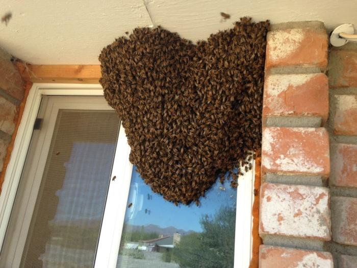 Как переселяют пчел (7 фото)