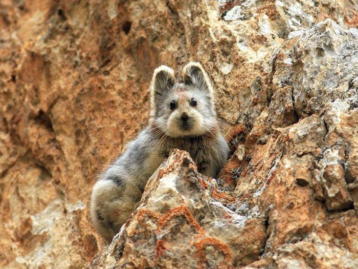 """Первое фото """"волшебного кролика"""" за последние два десятилетия (3 фото)"""