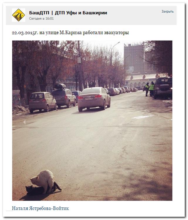 Подборка прикольных комментариев из соцсетей 29.03.2015 (27 скринов)