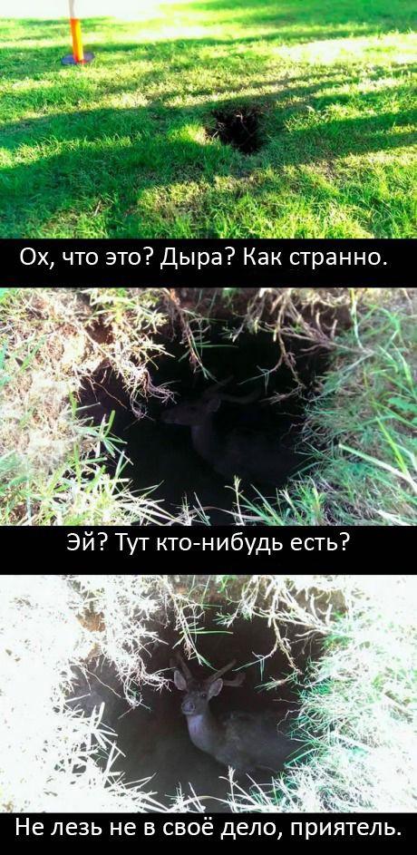 Подборка прикольных картинок 02.04.2015 (90 картинок)