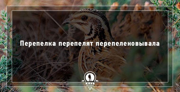 Скороговорки про животных (10 открыток)