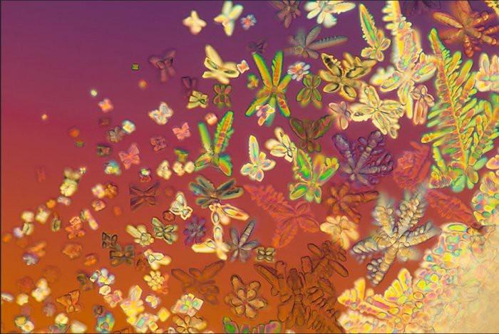 Красивые микрофотографии Линдена Гледхилла (16 фото)