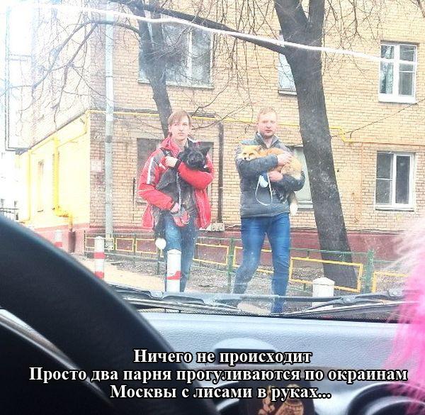 Подборка прикольных картинок 07.04.2015 (95 картинок)