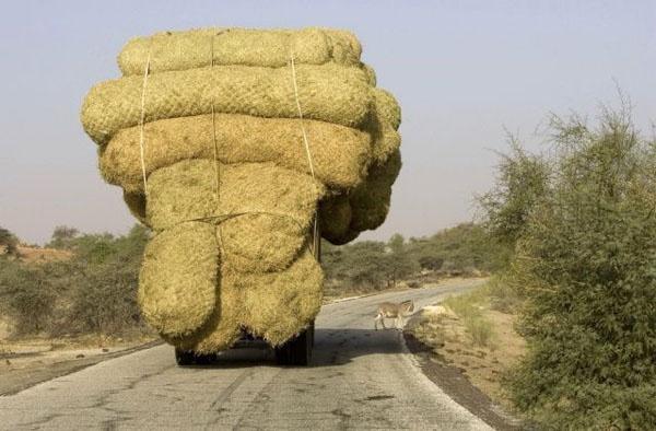 Гуру перевозок (35 фото)