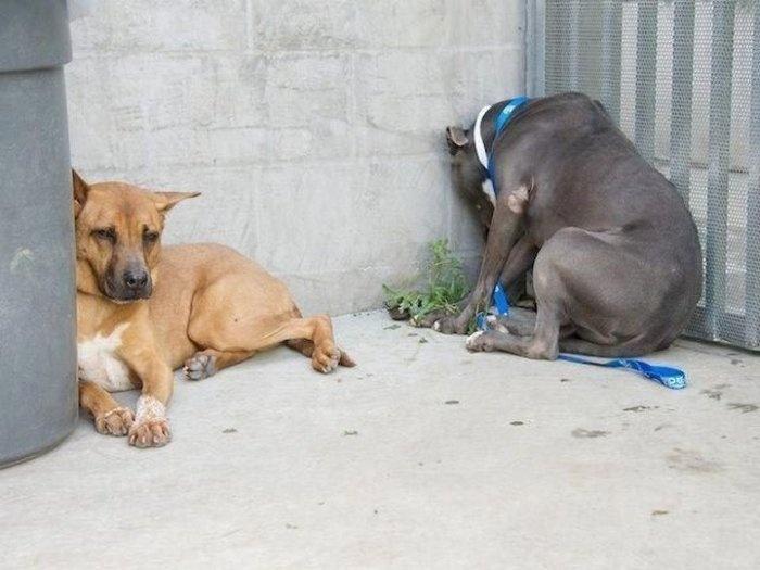 Смешные или необычные позы домашних животных могут быть симптомами болезни (6 фото