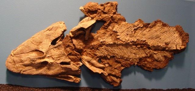 Топ-10 археологов-авантюристов (13 фото)