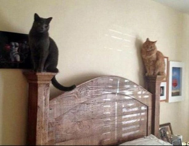 Пост с котами (14 фото и 4 коуба)