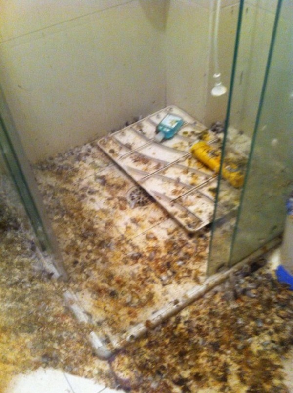 Последствия незакрытого окна (5 фото)