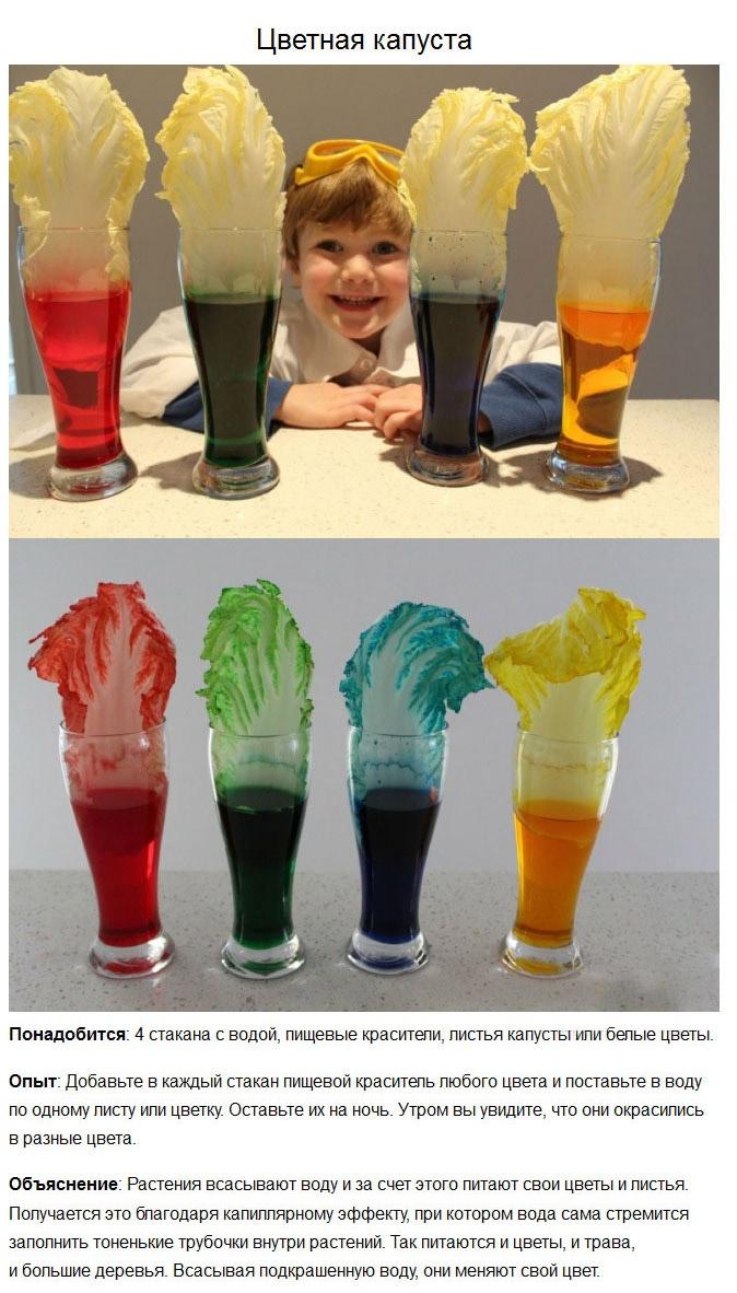 5 интересных и простых опытов  для детей (5 фото)