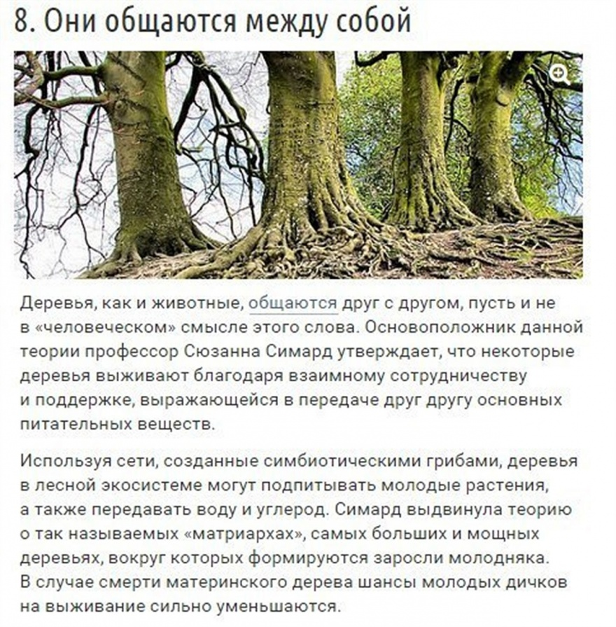 Необычные способности деревьев (10 фото)