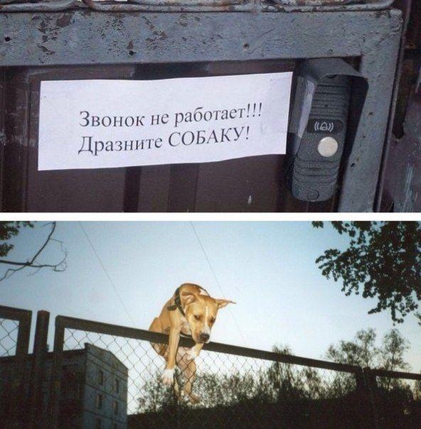 Подборка прикольных картинок 20.04.2015 (105 картинок)