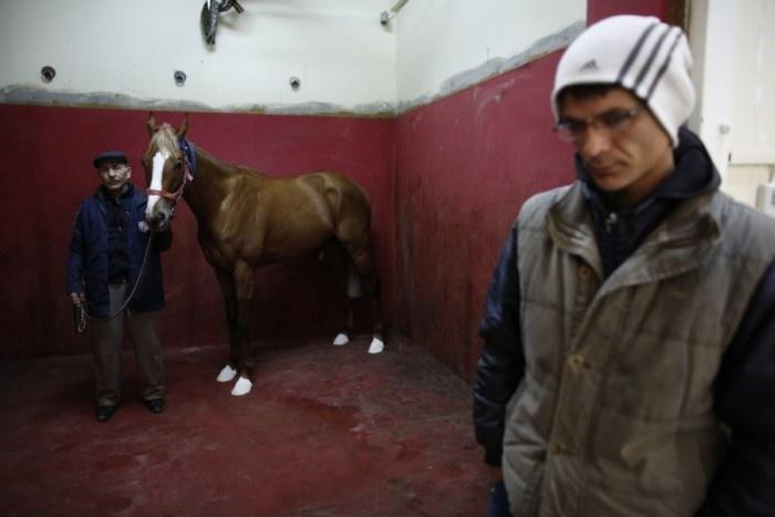 Как лечат лошадей на одном из турецких ипподромов (25 фото)